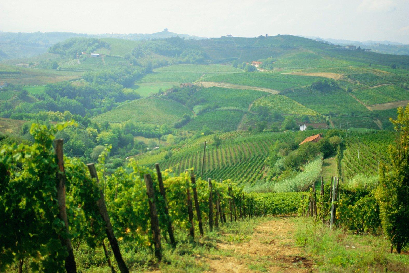 ARBYWT Typical landscape of vines in the Colli Piacentini, Piacenza, Emilia Romagna, Italy, Europe